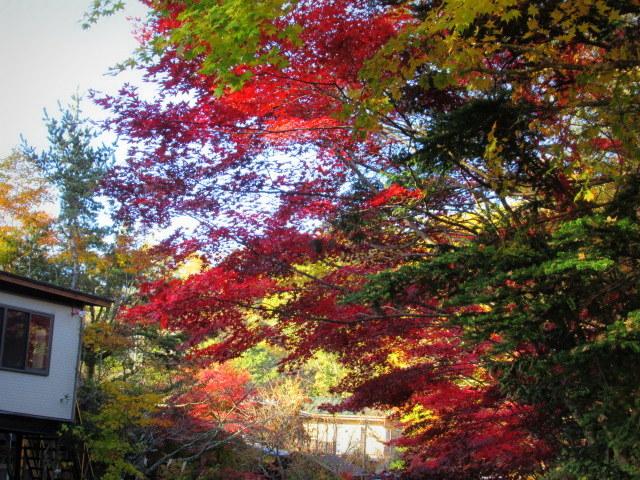2019・軽井沢の紅葉速報⑥ * 湯川沿いの紅葉♪_f0236260_20372681.jpg