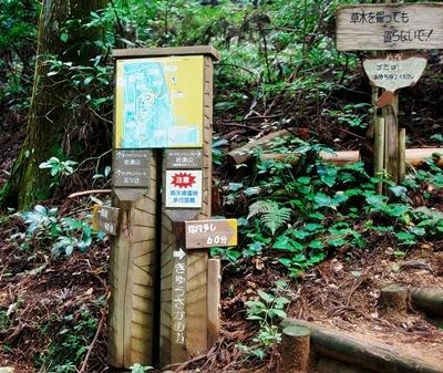 岩湧山はススキの見ごろ♪_b0194861_20181476.jpg