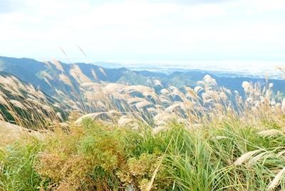 岩湧山はススキの見ごろ♪_b0194861_20212437.jpg