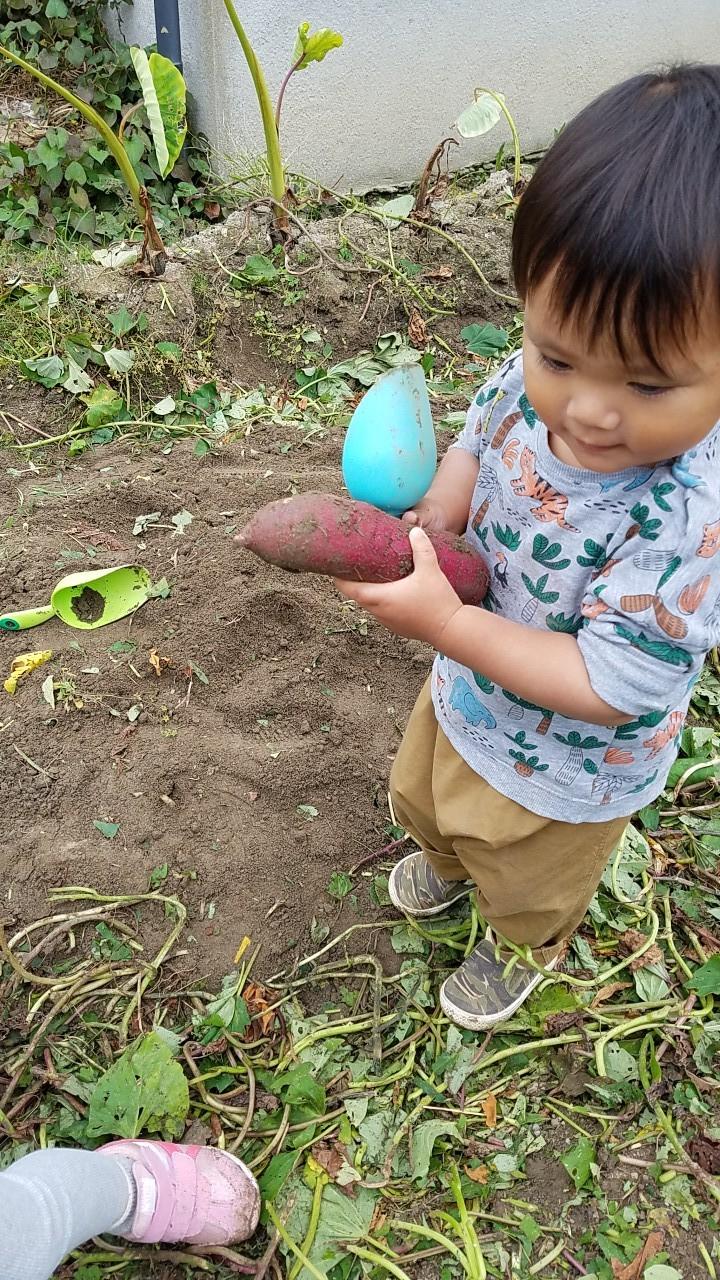 ★初めての芋ほり・・_b0313261_16534623.jpg