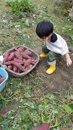 ★初めての芋ほり・・_b0313261_16560413.jpg