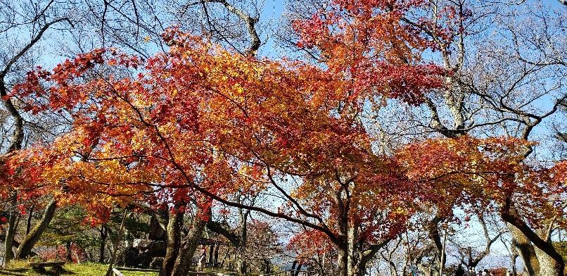 今年最後のツーリング高遠城公園_b0222066_10350301.jpg