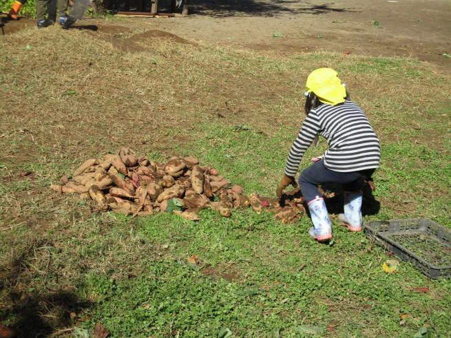 芋掘り 2019 〜収穫量は…〜_f0334882_18351577.jpg
