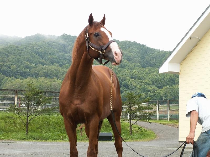 1995年の年度代表馬GI4勝のマヤノトップガンが死亡_b0015386_00090719.jpg