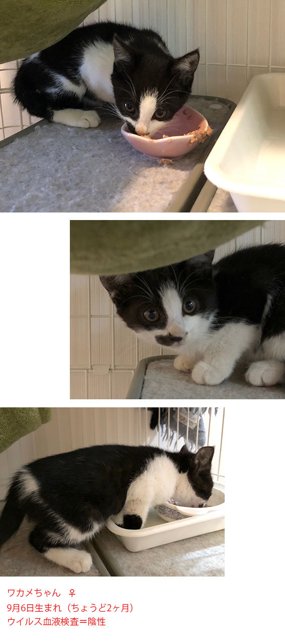 面会のお客様&新入り子猫のわかめちゃん&ミナトが来た!_d0071596_22222553.jpg