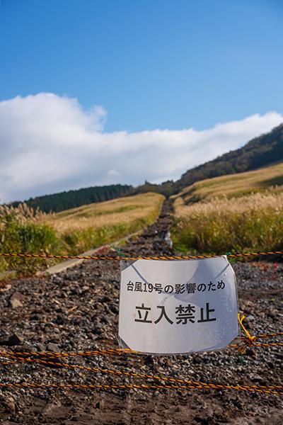 今箱根仙石原のすすきは見頃です_b0145398_15540164.jpg
