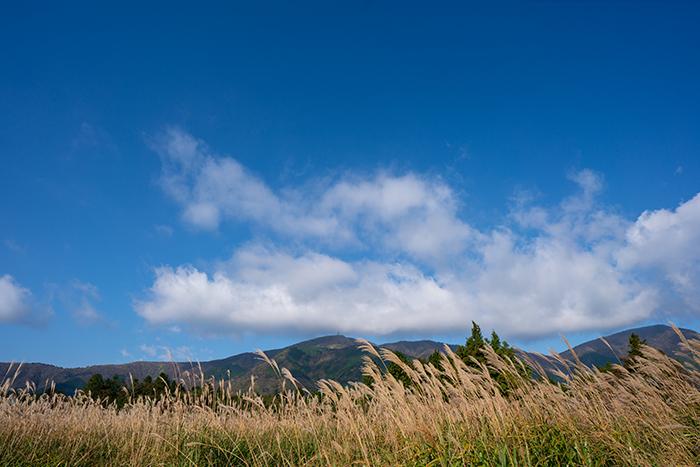 今箱根仙石原のすすきは見頃です_b0145398_15545876.jpg