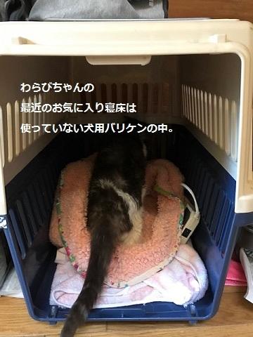わらびちゃんの手術_f0242002_10232761.jpg