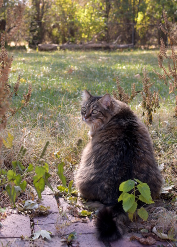秋の裏庭で_b0253205_06061162.jpg