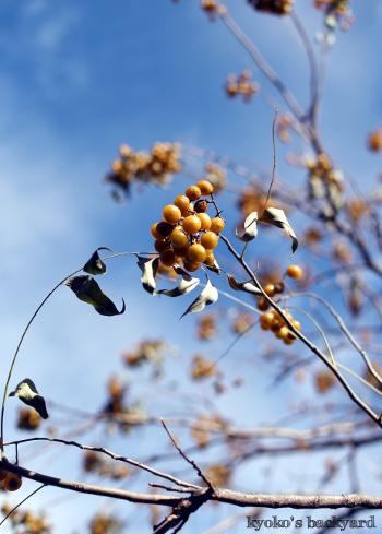秋の裏庭で_b0253205_06172136.jpg