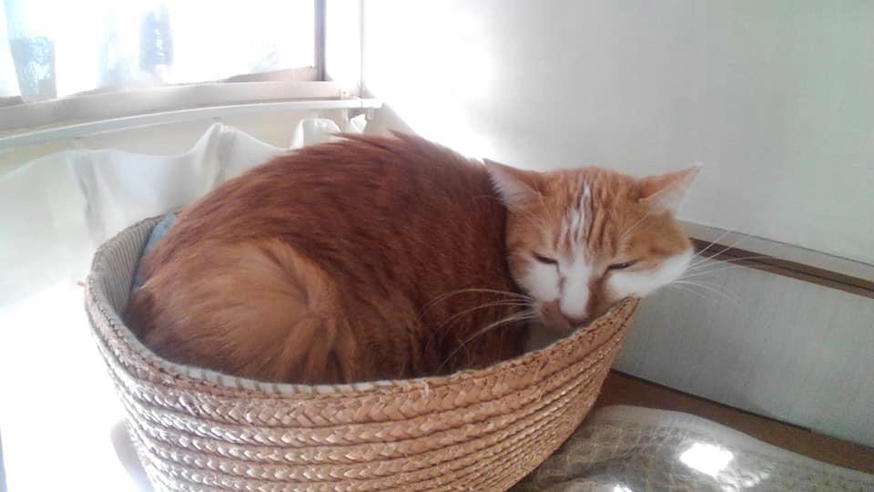 【猫】寒くなってみたので_f0141609_22274147.jpg