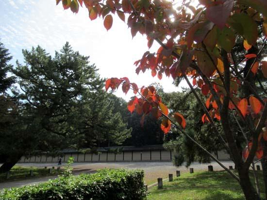 秋がスピードアップ 京都御苑_e0048413_19445075.jpg