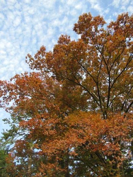 秋がスピードアップ 京都御苑_e0048413_19445716.jpg