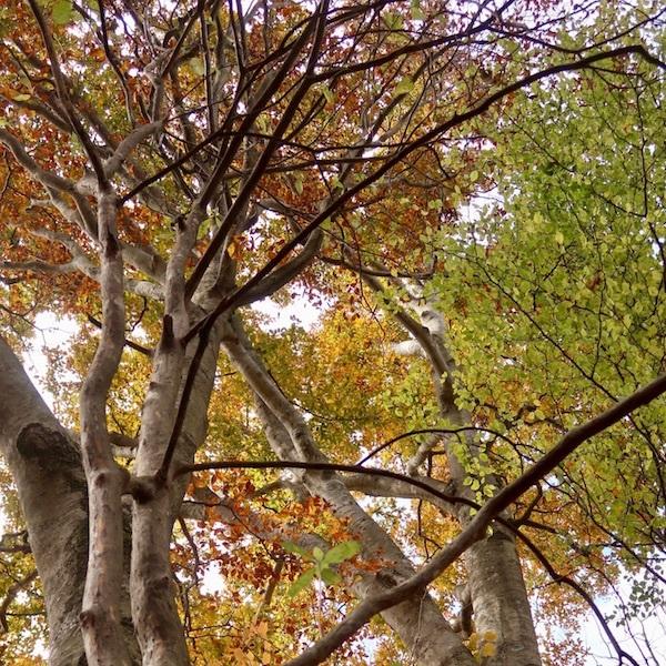 秋の山歩き_b0038919_12000929.jpg