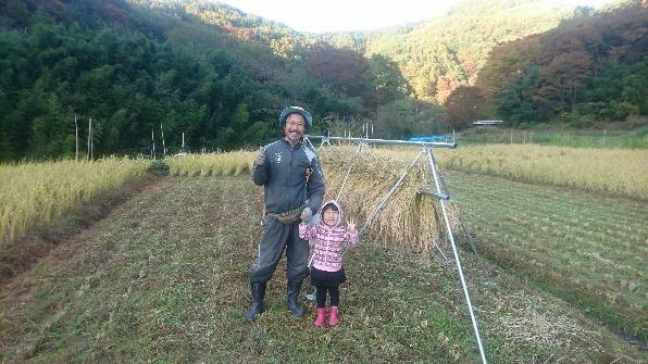自然農田の稲刈り_e0015223_15560174.jpg