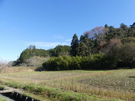 秋も深まり、植物、野鳥、そしてあばれる君_a0123836_17583913.jpg