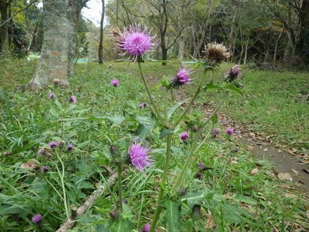 秋も深まり、植物、野鳥、そしてあばれる君_a0123836_17583919.jpg