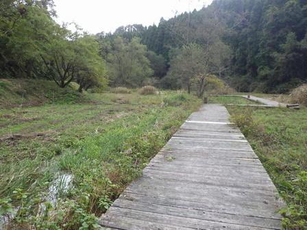 秋も深まり、植物、野鳥、そしてあばれる君_a0123836_17584070.jpg