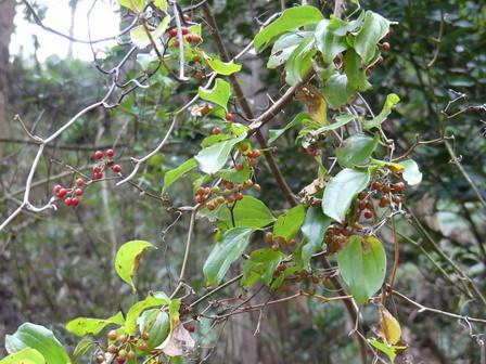 秋も深まり、植物、野鳥、そしてあばれる君_a0123836_17595959.jpg