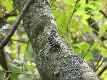 秋も深まり、植物、野鳥、そしてあばれる君_a0123836_18000011.jpg