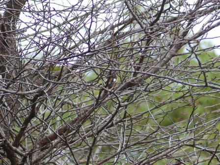 秋も深まり、植物、野鳥、そしてあばれる君_a0123836_18000087.jpg