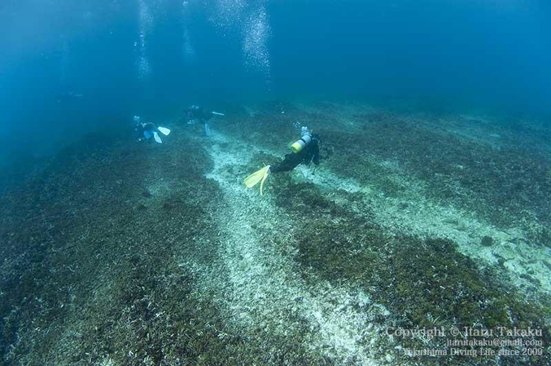 種子島・サンゴ調査〜10年間のサンゴの変遷〜_b0186442_18543940.jpg
