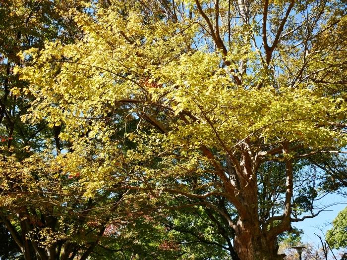 和歌山城二の丸庭園にて  2019-11-12 00:00  _b0093754_21023004.jpg