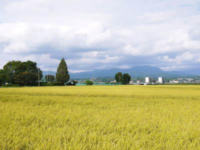 熊本の美味しいお米2019(七城米、菊池水源棚田米、砂田のれんげ米)大好評発売中!こだわり紹介 その1_a0254656_17464683.jpg