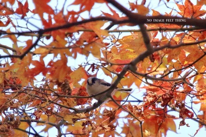 秋の日のエナガ♪_d0367763_19284456.jpg