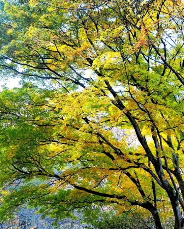 榛名湖畔の彩り_c0305565_17341908.jpg