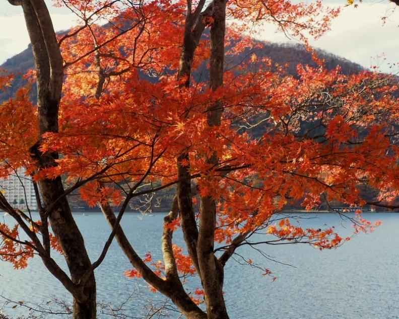 榛名湖畔の彩り_c0305565_17361126.jpg