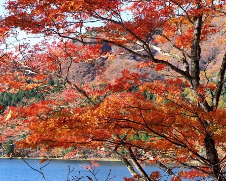 榛名湖畔の彩り_c0305565_17362144.jpg