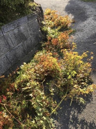 暖かな日差しが嬉しい秋の日に _c0334574_15210003.jpg