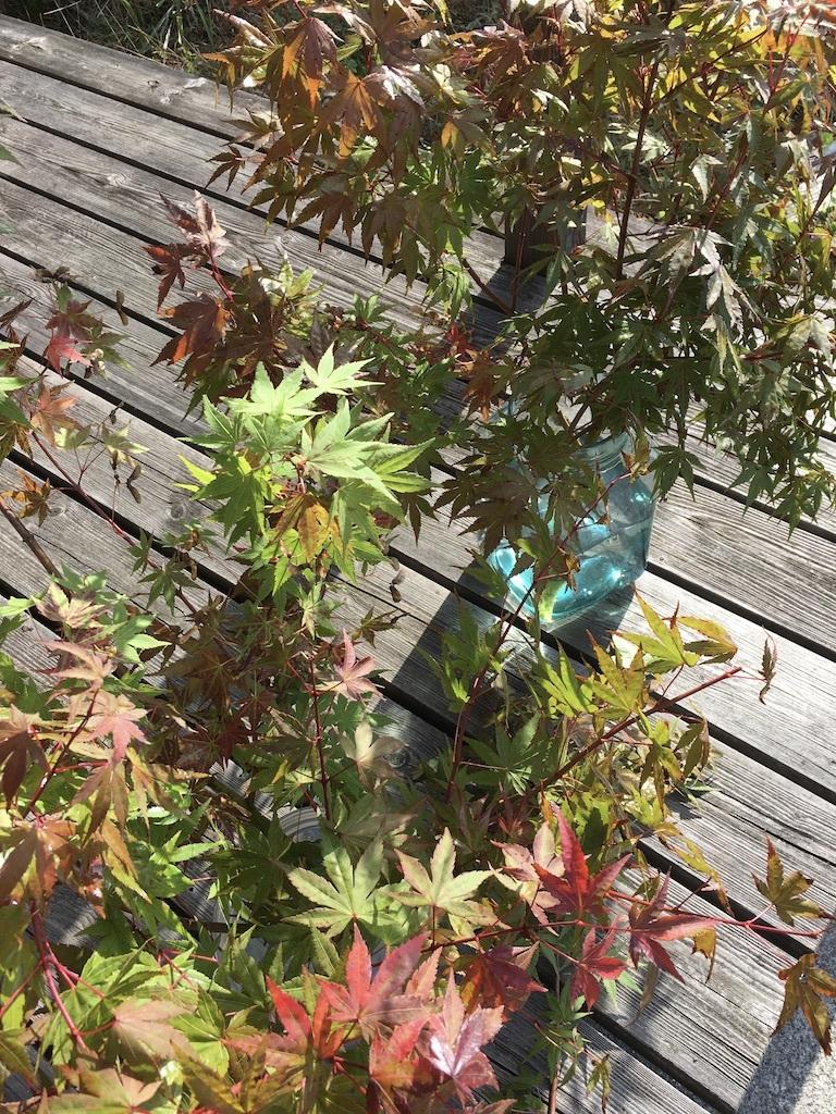 暖かな日差しが嬉しい秋の日に _c0334574_15213354.jpg
