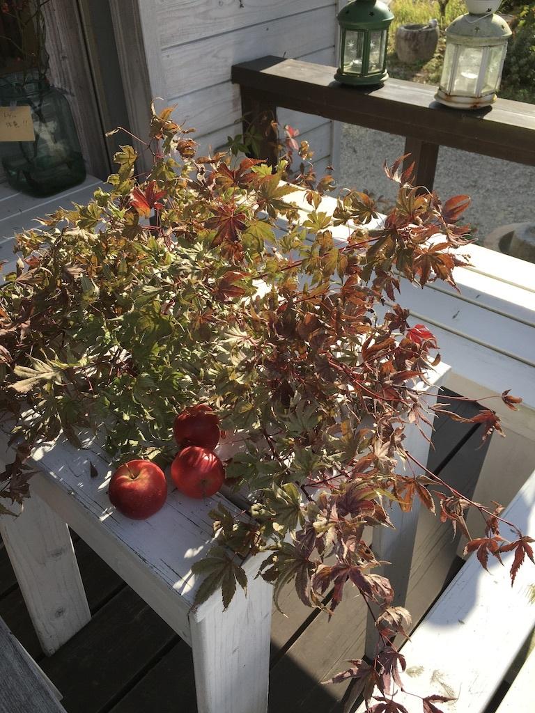 暖かな日差しが嬉しい秋の日に _c0334574_15220201.jpg