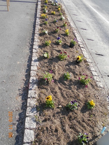 花壇の植え替え_a0318189_13281482.jpg