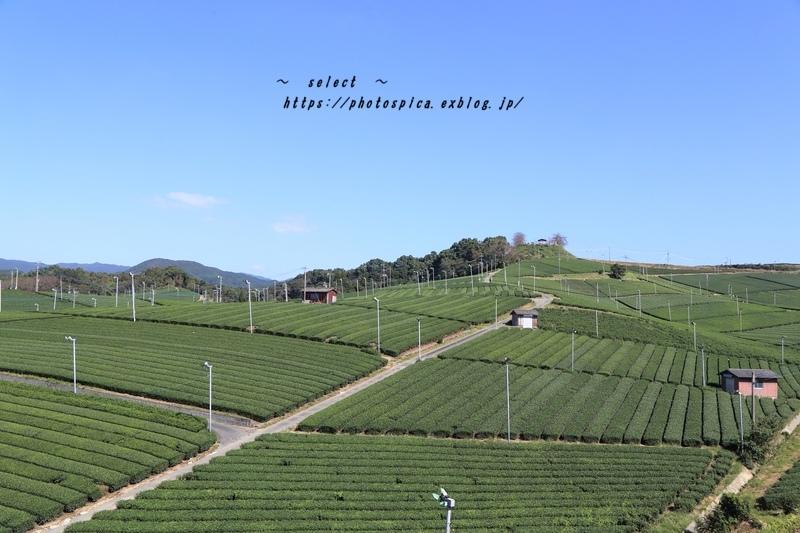 八女の茶畑_e0364398_06075124.jpg
