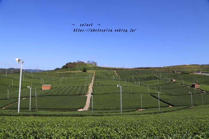 八女の茶畑_e0364398_06075200.jpg