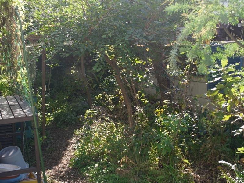 秋の庭仕事_e0276411_22330302.jpg