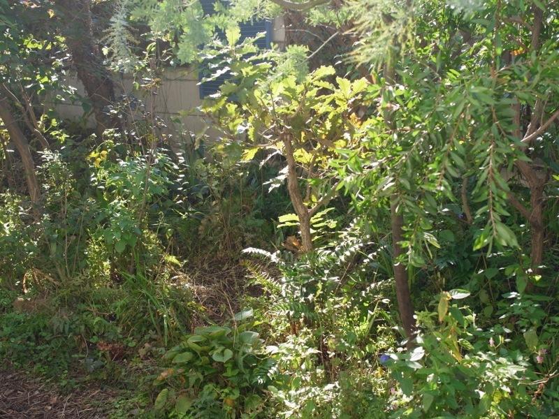 秋の庭仕事_e0276411_22330319.jpg