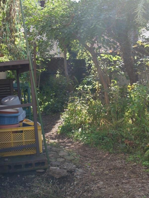 秋の庭仕事_e0276411_22330349.jpg
