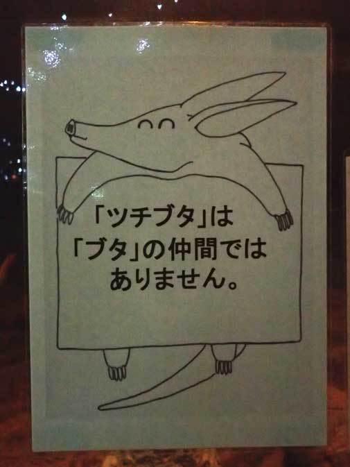 東山動植物園:スターライトハウス~地を這うルーセットオオコウモリ(December 2018)_b0355317_21501722.jpg