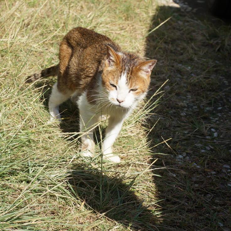 Cat by me, love_b0060239_10370258.jpg