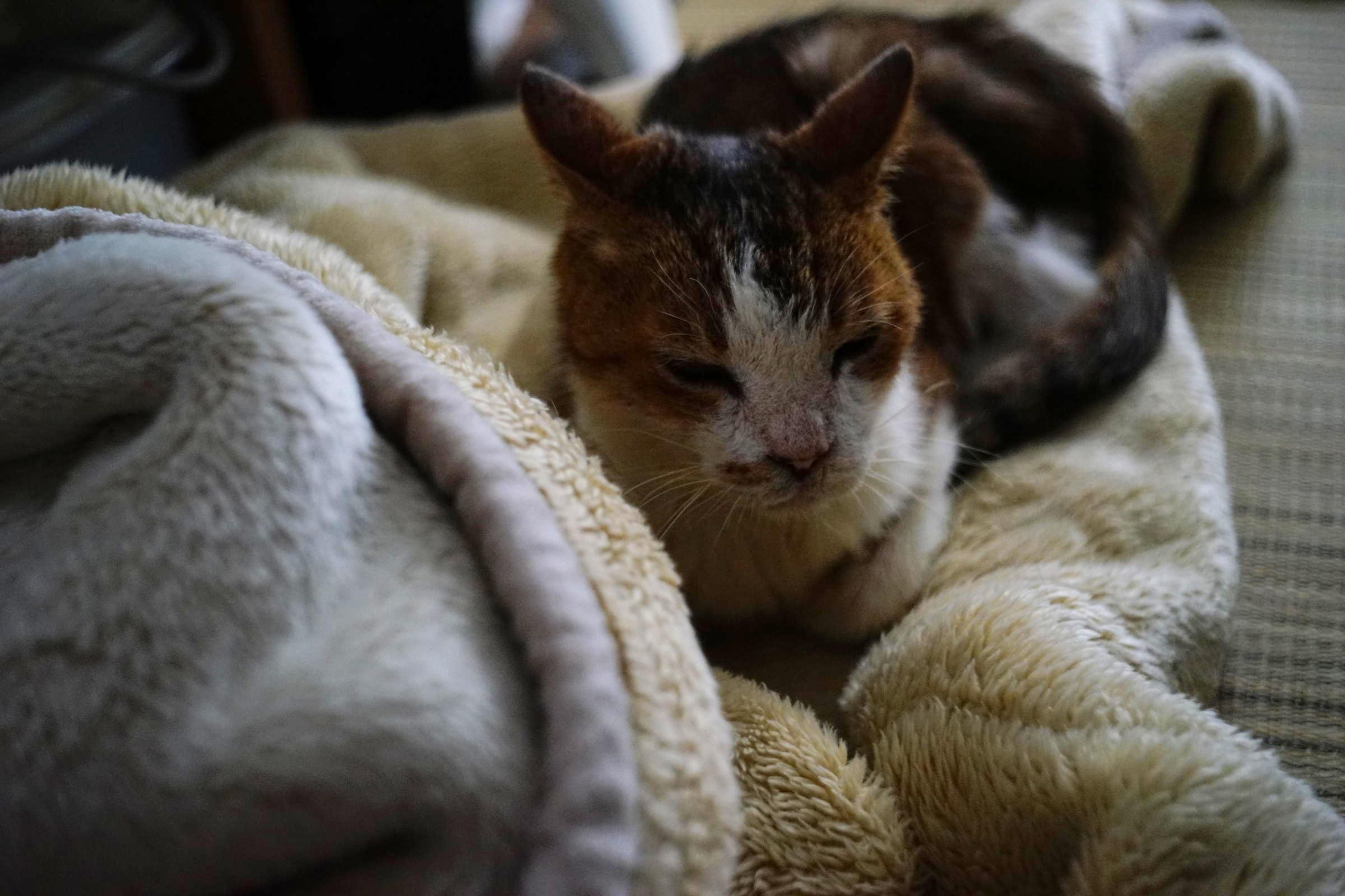 Cat by me, love_b0060239_10373159.jpg