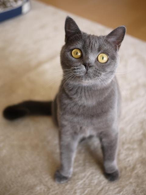 猫のお留守番 ちゃちゃちゃん編。_a0143140_17461721.jpg