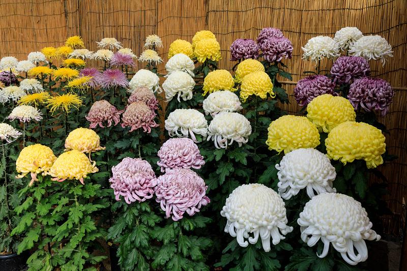 秋めく相楽園(神戸・元町)_f0155048_2213467.jpg