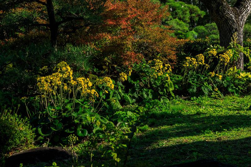 秋めく相楽園(神戸・元町)_f0155048_2225952.jpg