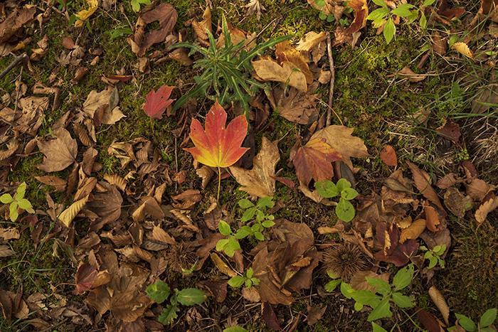 箱根の紅葉始まりました。_b0145398_21021589.jpg