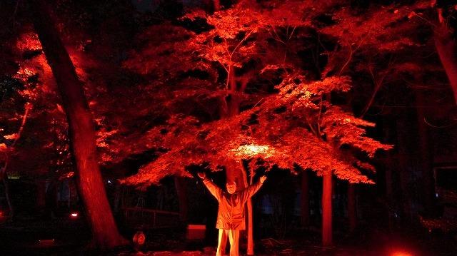 陀羅尼八幡神社もみじまつりライトアップ_b0163804_19205383.jpg