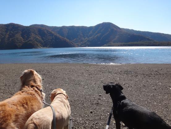 富士五湖方面へ_f0064906_11480971.jpg